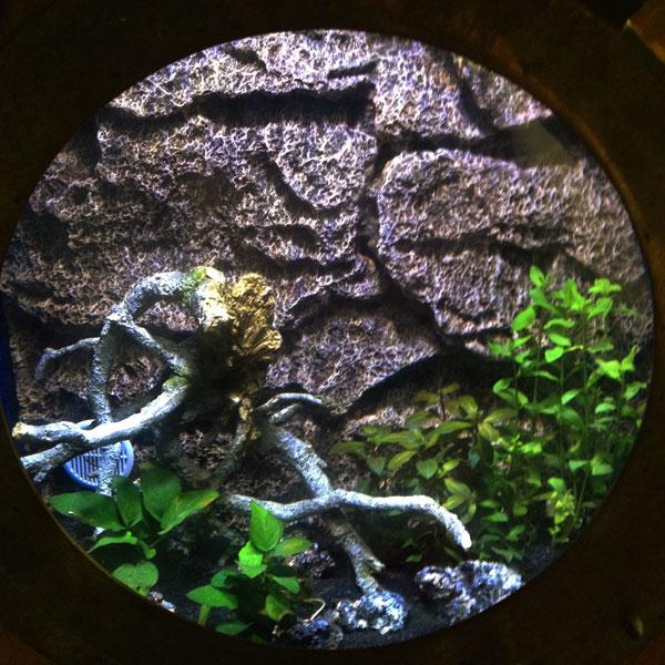 Gallerie-aquarium1