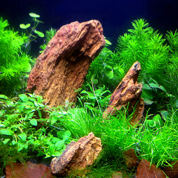 Gallerie-aquarium2