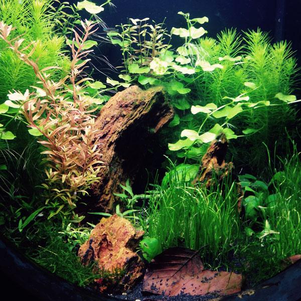 Gallerie-aquarium3
